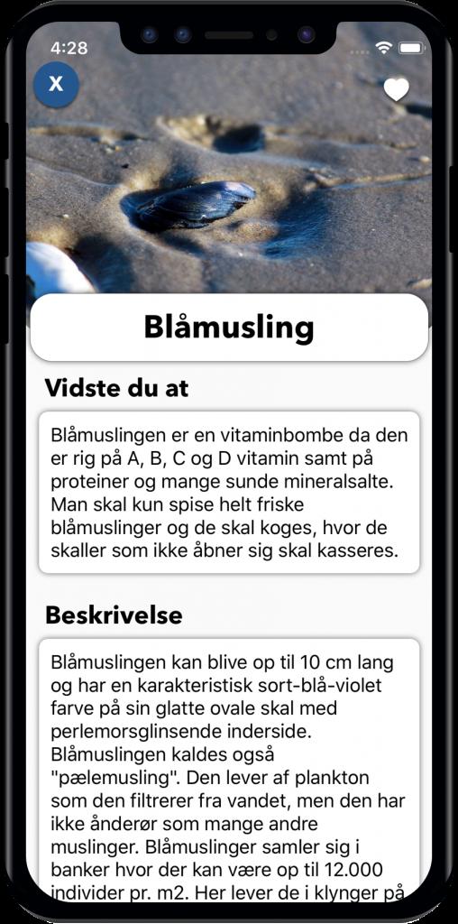 iPhone X - Blå musling